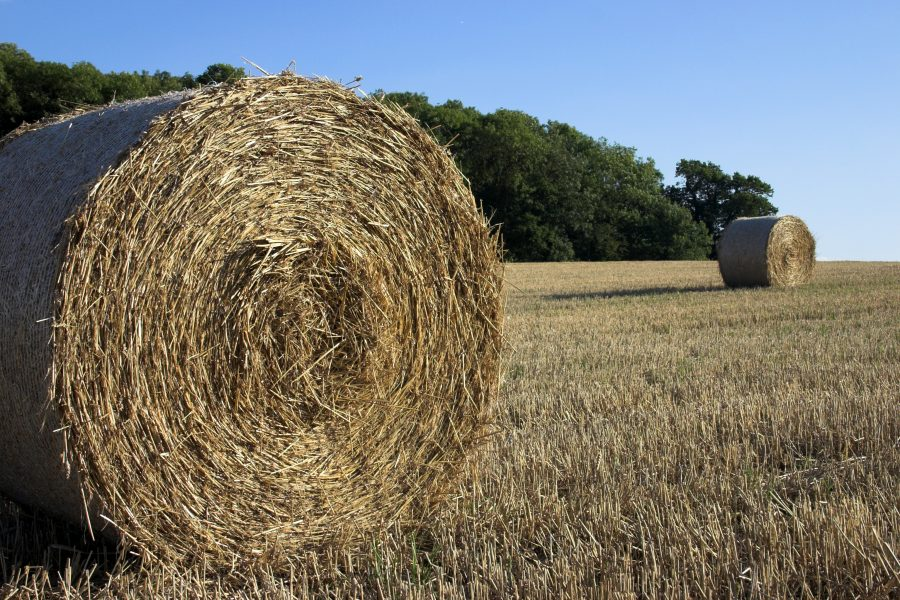 Photo of straw bales in a field